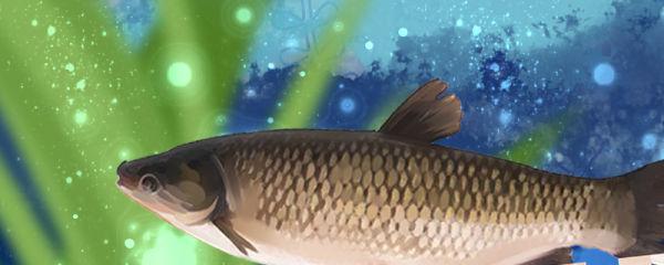 草鱼常见病有哪些,草鱼常见病的治疗方法介绍