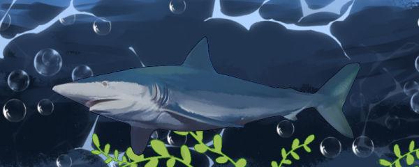 鲨鱼会吃同类吗,会吃自己的孩子么