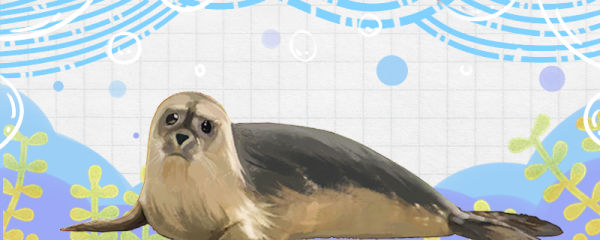海豹吃企鹅吗,吃螃蟹吗