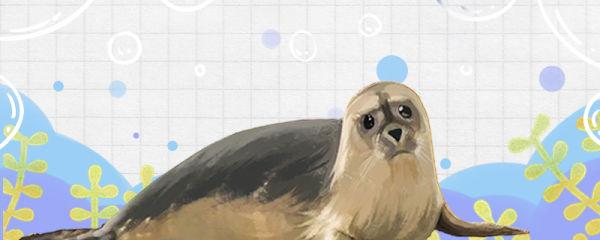 海豹能离开水吗,能在陆地上生活吗