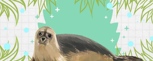 海豹有毛吗,毛是什么颜色的