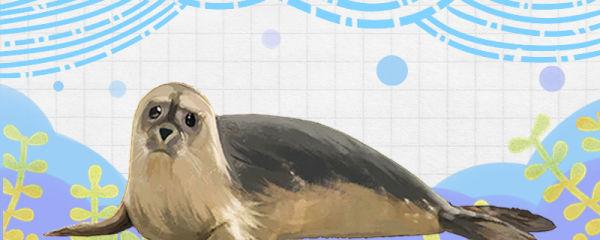 小海豹有毛吗,长大后就没有毛了吗