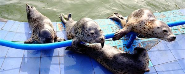 海豹能摸吗,为什么不能摸海豹