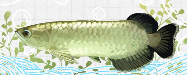 大鱼缸养什么鱼好看,适合大鱼缸的鱼有哪些
