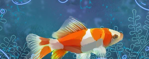 1米的缸适合养什么鱼,有哪些小鱼值得推荐