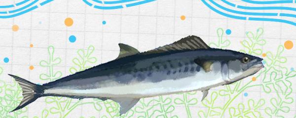 鲅鱼和燕鱼是同一种鱼吗,有什么区别