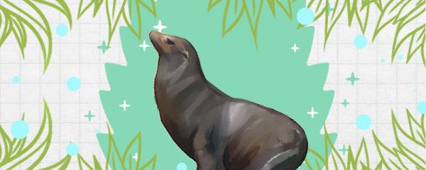 海狮吃什么食物,能吃企鹅吗