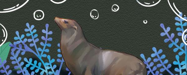 海狮是哺乳动物吗,有什么特征