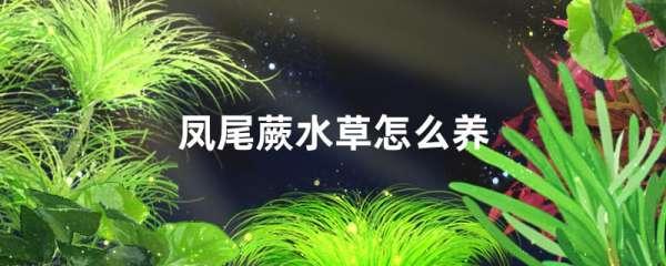 凤尾蕨水草好养吗,怎么养
