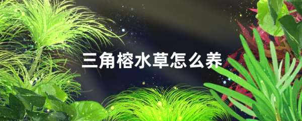 三角榕水草好养吗,怎么养