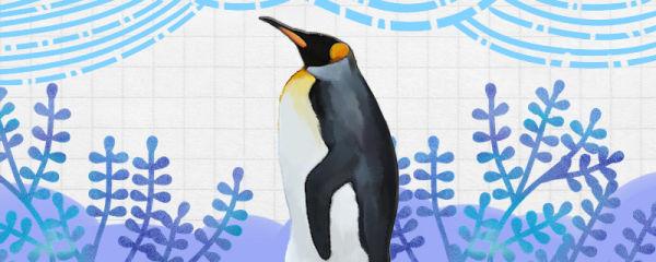 企鹅吃什么食物,怎么捕食