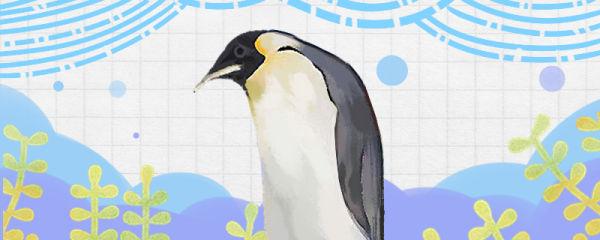 企鹅对人类友好吗,会攻击人吗