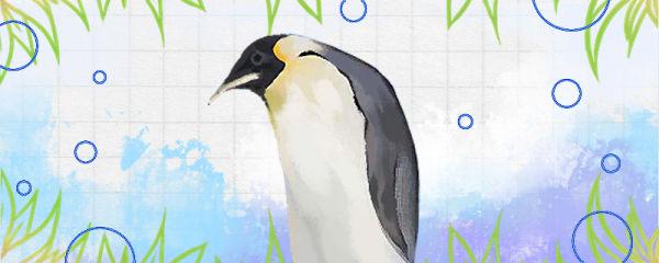 企鹅是什么动物,是哺乳动物吗