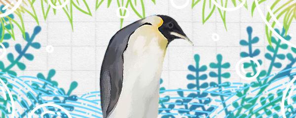 企鹅是什么动物,是鸟类吗