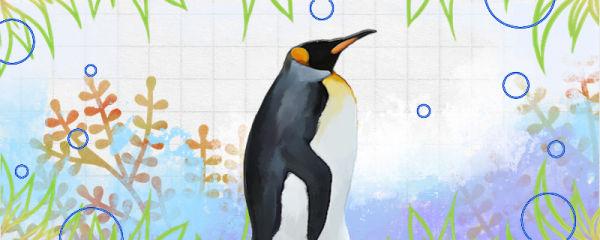 企鹅是什么颜色的,企鹅脚丫是什么颜色的