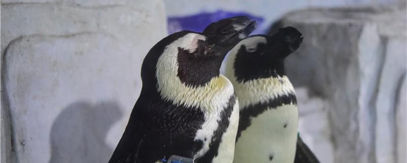 企鹅有毛吗,毛有什么作用