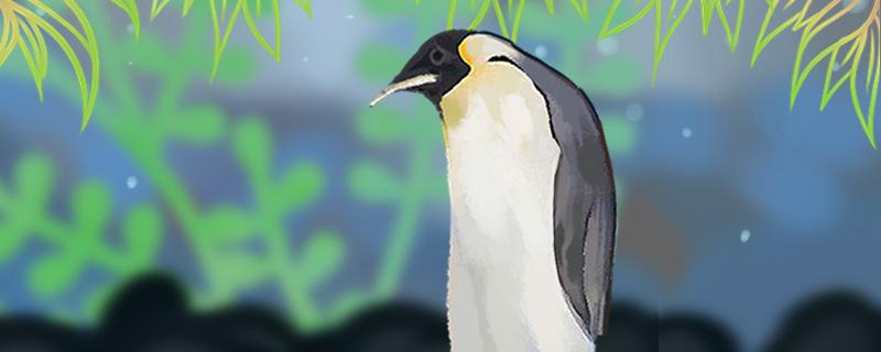 企鹅怎么繁殖,多大可以繁殖
