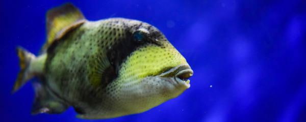 鱼类是脊椎动物吗,鱼类的体形有哪几种