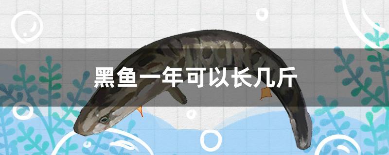 黑鱼一年可以长几斤-轻博客