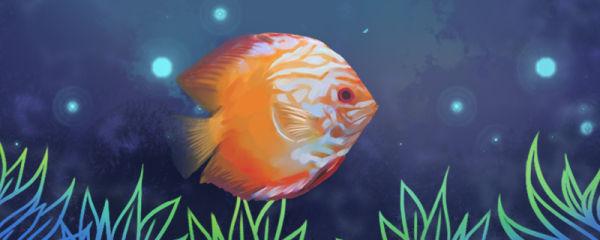 红七彩神仙鱼好养吗,怎么养