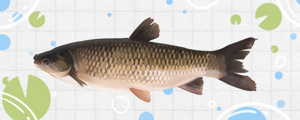 青鱼和草鱼是一种鱼吗,有什么区别