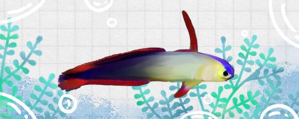 雷达鱼好养吗,怎么养