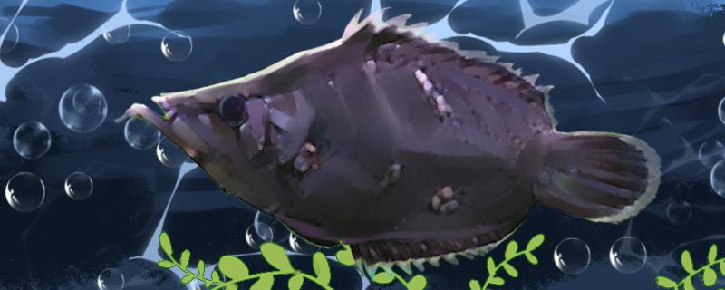 叶形鱼好养吗,怎么养