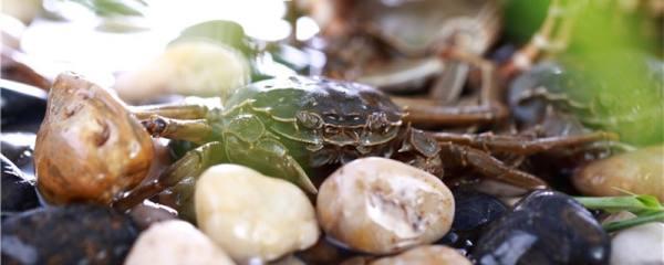 螃蟹多久喂一次,水温多少度开始喂料