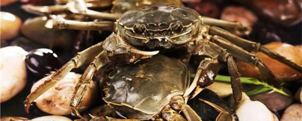 螃蟹如何繁殖,多久繁殖一次
