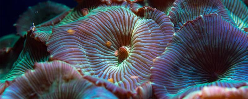 海葵是动物还是植物,生活在哪里