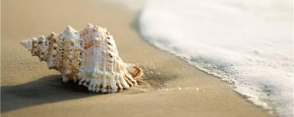 海螺有几种,常见品种有哪些