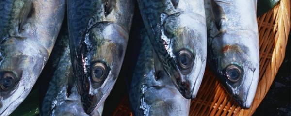鲭鱼和秋刀鱼一样吗,有什么区别
