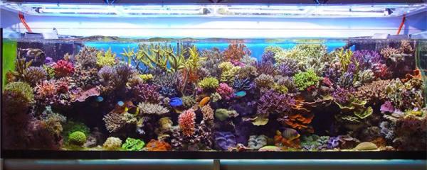 怎么算鱼缸多少升水,鱼缸水要注意什么