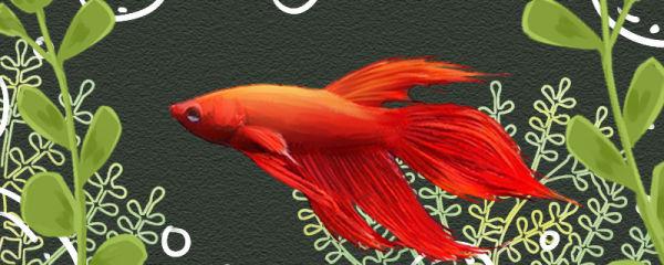 鱼缸没有氧气泵能养鱼吗,养什么鱼不用氧气泵