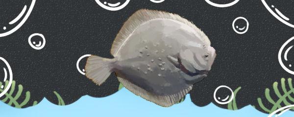 多宝鱼刺多吗,和鲈鱼哪个刺少