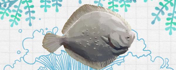 多宝鱼和偏口鱼一样吗,有什么区别