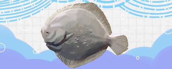 多宝鱼是海鱼吗,是深海鱼吗