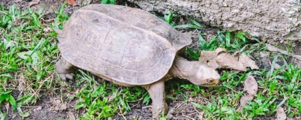 乌龟身上长白斑怎么办,腐皮病怎么治疗