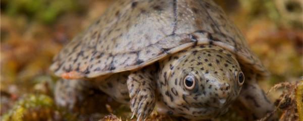 乌龟是什么动物,这种动物有哪些特点