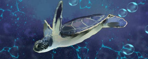 乌龟和海龟的区别有哪些,海龟有什么特点