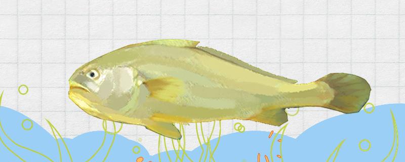 大黄花鱼有刺吗,刺多吗
