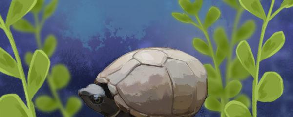 什么乌龟适合家养,哪种龟好养活