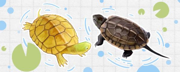 什么乌龟可以和鱼混养,哪些龟不能群养