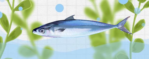 青占鱼有毒吗,有寄生虫吗