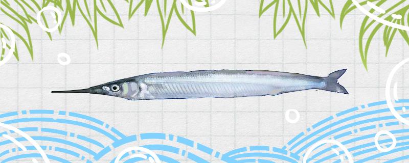 棒棒鱼是什么鱼,是海鱼吗-轻博客
