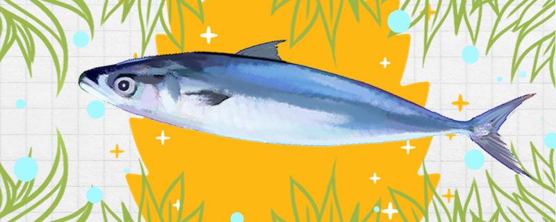 鲐鲅鱼和鲅鱼一样吗,有什么区别