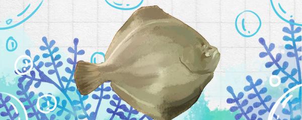 比目鱼和多宝鱼一样吗,有什么区别