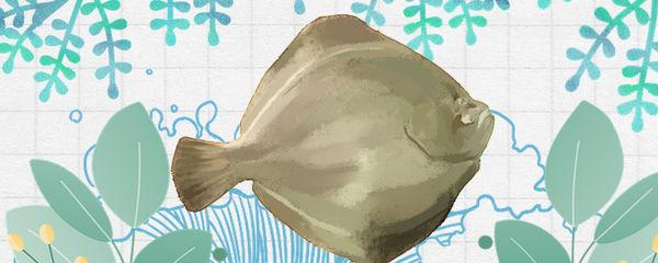 比目鱼和龙利鱼一样吗,有什么区别