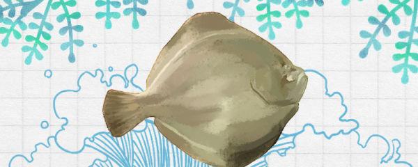 比目鱼生活在哪里,生活在海底吗