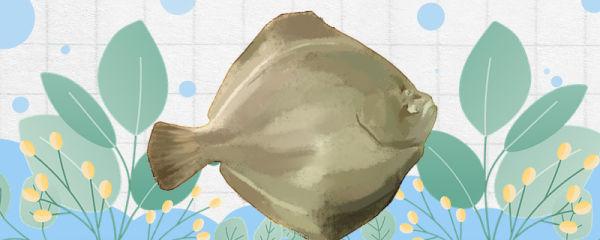 比目鱼是海鱼吗,生活在深海还是浅海